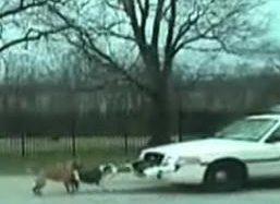 Suņi saplosa policijas mašīnu