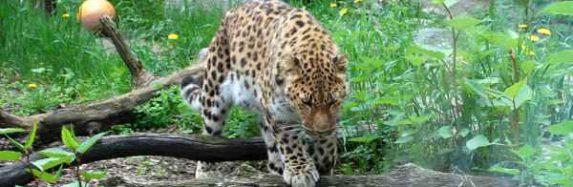 Tallinas Zoo