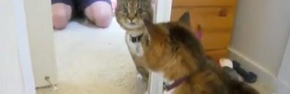 Kaķis satiek ļauno dvīņubrāli