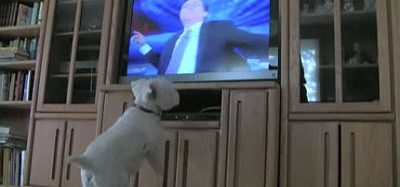 Cik liela ir suņa sajūsma ieraugot sevi TV?