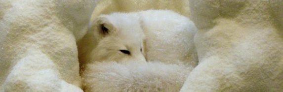 Dzīvnieki sniegā