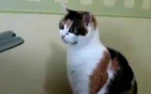 Kaķis cīnās ar printeri