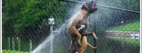 Suņi un zāles smidzinātāji